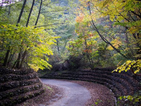 Country Road, Yamanashi Highlands