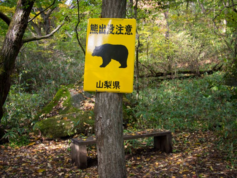 Bears! Yamanashi Highlands