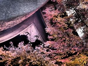 Koyo at Heirinji