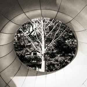 Trees-15