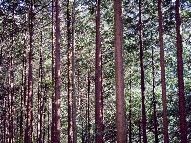 Cedar Woodlot, Mitakesan