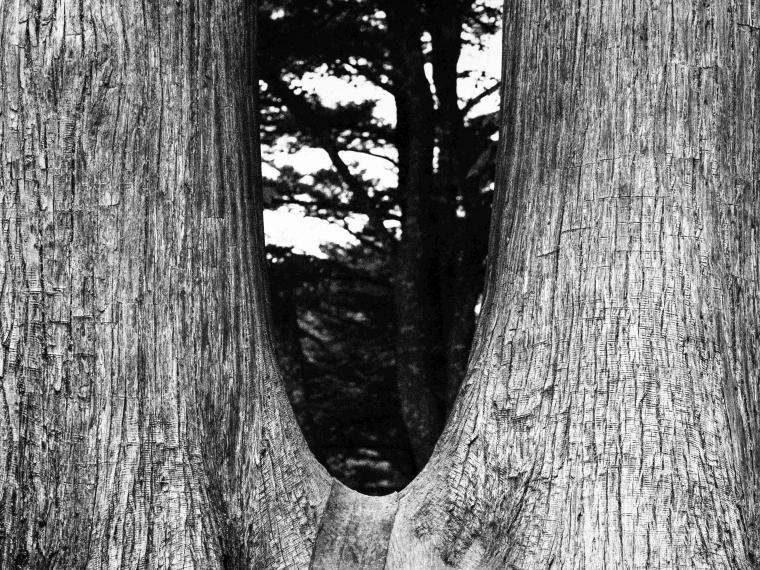 Two Cedars, Mitakesan