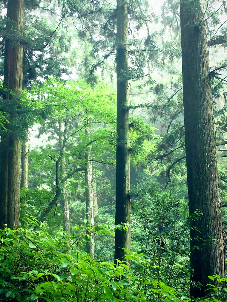 Misty Forest, Mitakesan