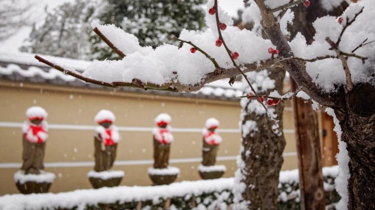 Jizo and Berries in Snow, Kodaira