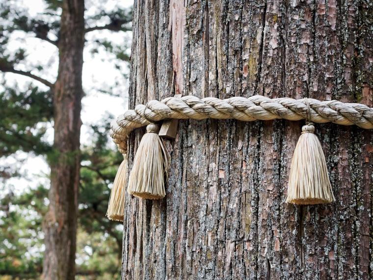 Shimenawa and Tree