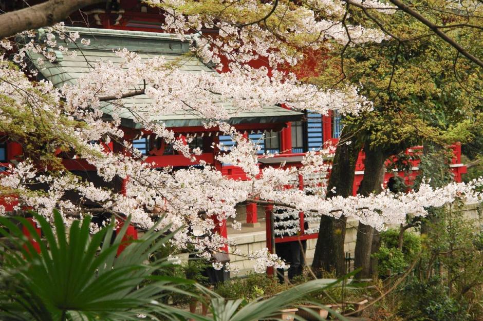 Inokashira Koen