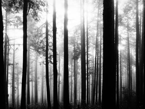 Cedar Woodlot Mount Mitakesan; Tokyo Japan #grainyfilm