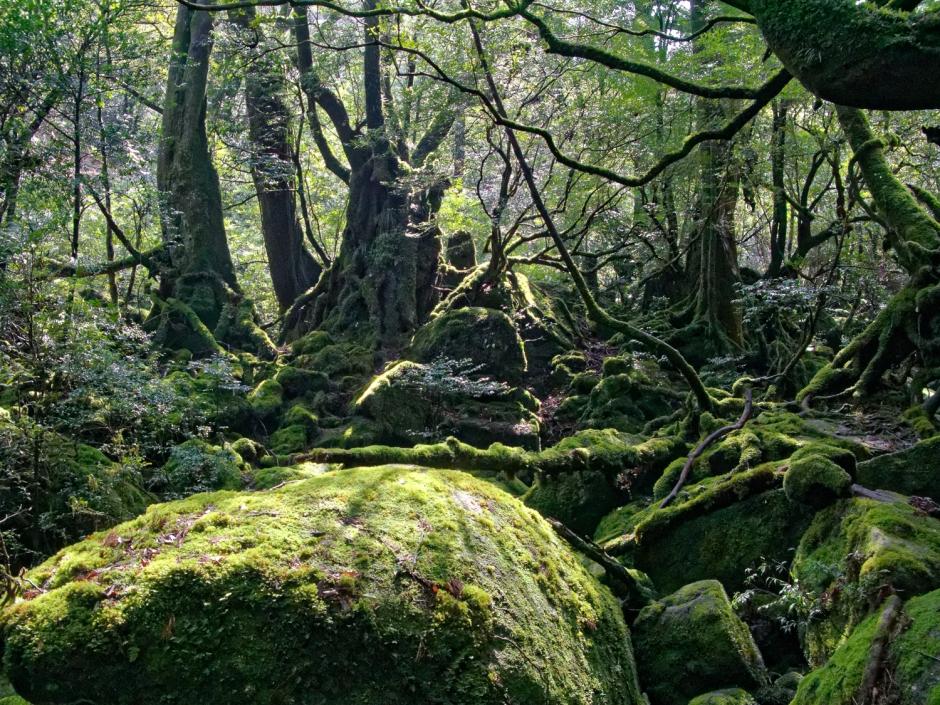 Shiratani Unsuikyo: Princess mononoke's Garden; Yakushima Island, Japan